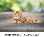 Stock photo cat 663473164