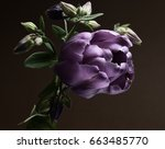 purple tulip and flowers... | Shutterstock . vector #663485770
