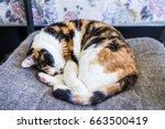 Closeup Of Calico Cat Sleeping...