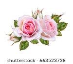 flower arrangement of pink... | Shutterstock . vector #663523738