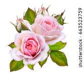 flower arrangement of pink... | Shutterstock . vector #663523759