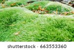 Green Moss Carpet In Forest