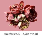 curly tulips on a pink...   Shutterstock . vector #663574450