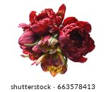 curly tulips on a yellow... | Shutterstock . vector #663578413