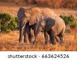 Stock photo elephant with baby elephant a herd of elephants family of elephants kenya africa safari in 663624526