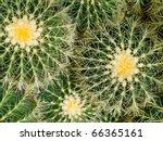 Cactus Macros With Texture...