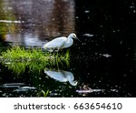 A Snowy Egret And Its...
