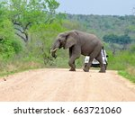 kruger national park  south... | Shutterstock . vector #663721060