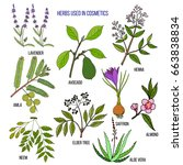 herbs used in cosmetology. hand ... | Shutterstock .eps vector #663838834