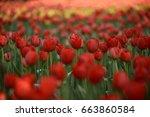 beautiful flower | Shutterstock . vector #663860584