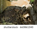 profile view of a toad | Shutterstock . vector #663861340