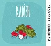ripe root vegetables radishes... | Shutterstock .eps vector #663887350