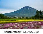beautiful view of mishima's... | Shutterstock . vector #663922210