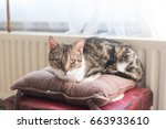 tabby cat looking at the camera | Shutterstock . vector #663933610