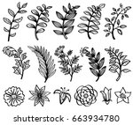 sketch hand drawn branch and... | Shutterstock .eps vector #663934780