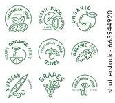 digital vector green vegetable... | Shutterstock .eps vector #663944920