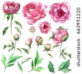 watercolor peony flowers and... | Shutterstock . vector #663951220