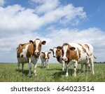red and white cows in green... | Shutterstock . vector #664023514