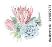 watercolor vintage succulents... | Shutterstock . vector #664050178