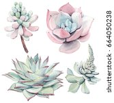 Watercolor Vintage Succulents...