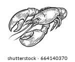 lobster  omar  cancer seafood... | Shutterstock .eps vector #664140370