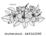 hibiscus flowers drawing and... | Shutterstock .eps vector #664161040