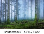 dark and mysterious pine forest ... | Shutterstock . vector #664177120