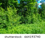 june solstice in the deep of... | Shutterstock . vector #664193740