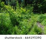 june solstice in the deep of... | Shutterstock . vector #664195390