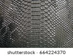 background of crocodile skin... | Shutterstock . vector #664224370