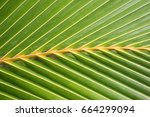 Small photo of Bright green close up of coconut palm frond showing diagonal leaves in Niue, Pacific Island.