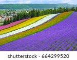 violet lavender and flower...   Shutterstock . vector #664299520