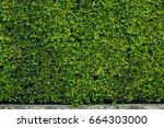 decorative garden on a cement... | Shutterstock . vector #664303000