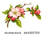 Vector Apple Blossom Branch...