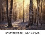 Morning Sun Rays In A Forest...