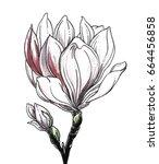 White Magnolia Tropical Flower...