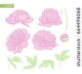 set of peony flowers flat... | Shutterstock .eps vector #664496068