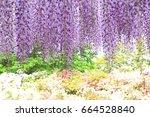 purple wisteria at ashikaga...   Shutterstock . vector #664528840