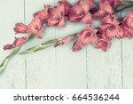 Beautiful Gladiolus On Wooden...
