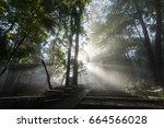 beautiful sunlight in the... | Shutterstock . vector #664566028
