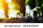 seed  stages of growth of plant ...   Shutterstock . vector #664569844