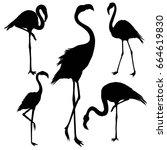 Flamingo Silhouette  Vector ...