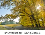 shinjuku park in autumn  tokyo...   Shutterstock . vector #664625518