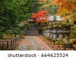 view of beautiful japan maple...   Shutterstock . vector #664625524