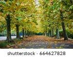 shinjuku park in autumn  tokyo...   Shutterstock . vector #664627828