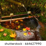 maple leafs fall on moss tone   Shutterstock . vector #664627990