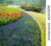 keukenhof gardens  lisse ... | Shutterstock . vector #66462838