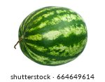 watermelon isolated on white... | Shutterstock . vector #664649614