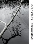 Small photo of dead tree above water