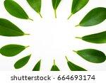 green leaves frame template on...   Shutterstock . vector #664693174